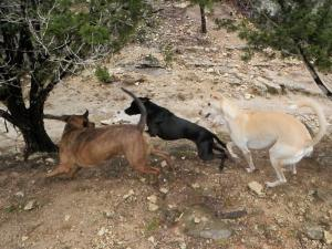 showing-off-their-moves-at-dog-ranch